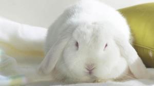 Rabbits have a nasty bite.