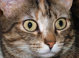I was as shocked as this cat when the cat in the show turned out to be a masochist.