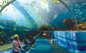 I get a little uneasy at aquariums.