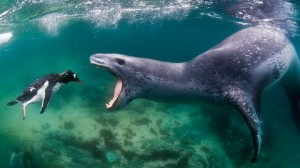 Seals can be pretty scary.
